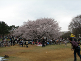 2010-04-04-1073-s.png