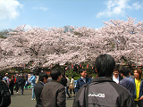 2011-04-10-1131-s.png